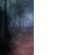 Forest_fog_copy.png